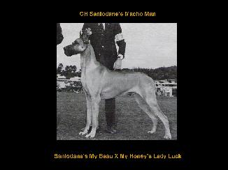 CH Sanlodane's My Beau X My Honey's Lady Luck