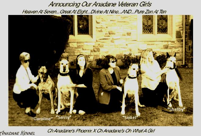 Anadane Great Danes The last of the Grand Dams
